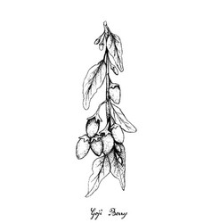 Hand drawn of goji berries on white background vector