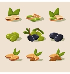 Olives and Nuts Modern Design vector