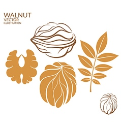 Walnut Set vector