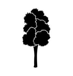 black tree silhouette leaf foliage natural image vector image