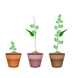 Flower and leaves of neem in ceramic flower pots vector