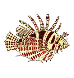 sea creature red lionfish engraved hand drawn in vector image