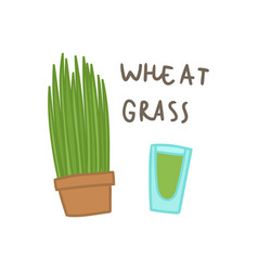 wheat grass superfood vector image
