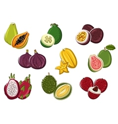 Assortment of fresh harvested tropical fruits vector image
