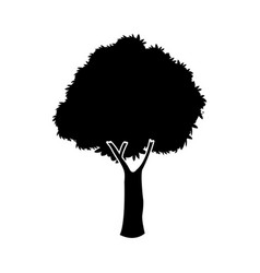 black oak tree silhouette nature plant image vector image