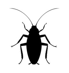 Cockroach silhouette symbol pets insect vector
