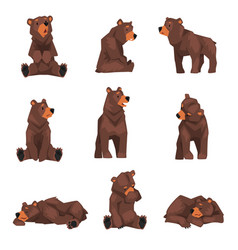 Cute brown grizzly bear collection wild animal vector