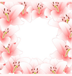 Pink lily flower border isolated on white vector
