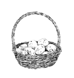 Potatoes in a wicker basket on white background vector