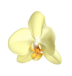 white tropical exotic flower realistic isolated vector image