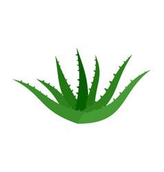 Aloe vera icon flat style vector