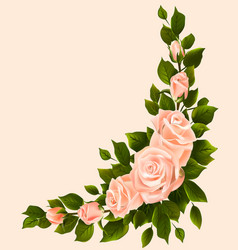 bouquet of roses with leaves in the corne vector image