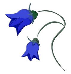 bright bellflower or color vector image
