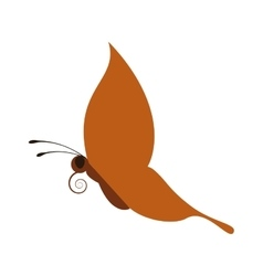 Orange Butterfly icon Insect design vector