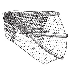 Portion of the wing of a moth vintage vector