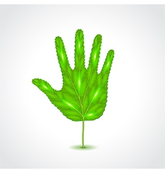Leaf like human hand palm vector image vector image