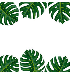 Drawing tropical leaves vector