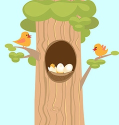 Family birds on a tree hollow nest and vector