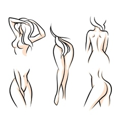 Female body parts vector image