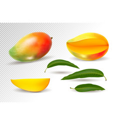 Mango realistic fruit whole and pieces vector