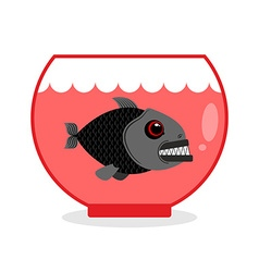 Piranha in Aquarium Dangerous Home sea creature vector image