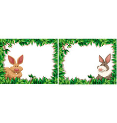 rabbit on nature frame vector image