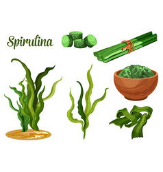 seaweed spirulina superfood dietary supplement vector image