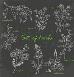 Set of isolated herbs in sketch style on dark vector image