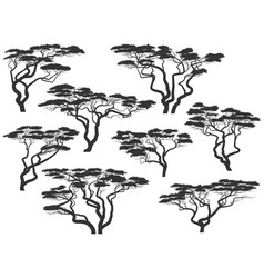 Silhouettes african acacia trees vector