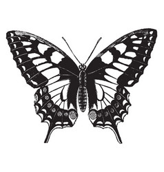 Swallow tailed butterfly vintage vector