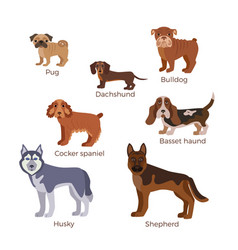 dog breed silhouette vector image