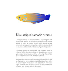 Aquarium blue striped tamarin wrasse poster vector