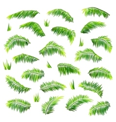Colored palm leaves set isolated on white vector