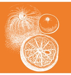 Hand drawn orange citrus in vector image