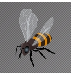 Honey bee icon on a transparent background vector