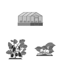 Isolated object of greenhouse and plant icon set vector