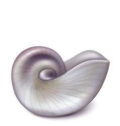 nautilus sea shell vector image