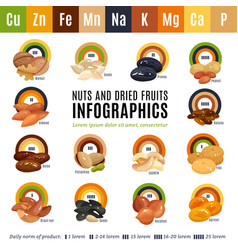 nuts flat infographics vector image