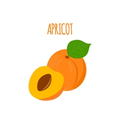 Ripe Tasty Apricot on a White Background vector image vector image