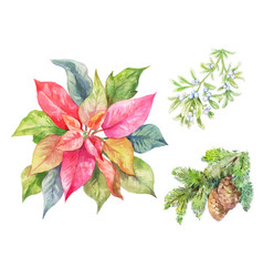 set of christmas plants poinsettia fir branch vector image