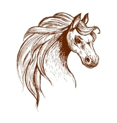 Wild feral horse in aggressive posture sketch vector image