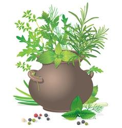 Bouquet fresh herbs in ceramic pot vector image