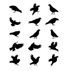 Silhouette of Pigeons Isolated on White vector image