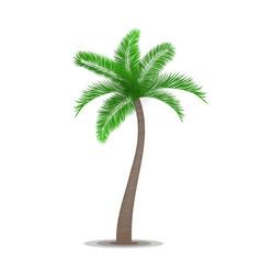 Tropical palm tree symbol vector image