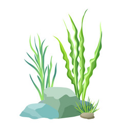 Aquatic plants with stones vector