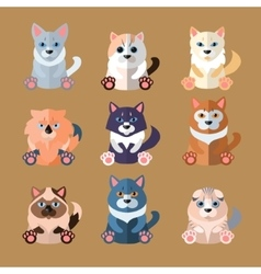 Breeds cats icons vector