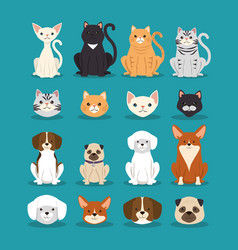 Dogs and cats pets characters vector