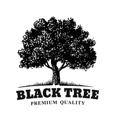 old tree with text emblem on white background vector image