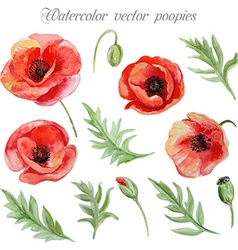 Set red watercolor poppy flowers vector