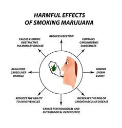 The harmful effects smoking marijuana harmful vector